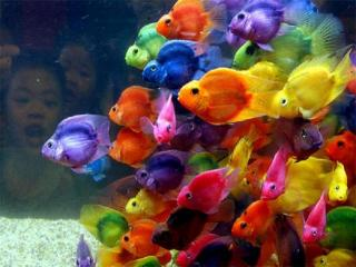 Colorful Fishys