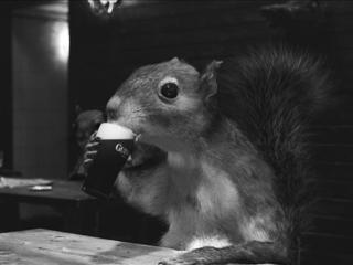 Guinness Squirrel